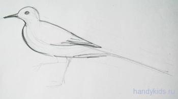 Как нарисовать трясогузку поэтапно