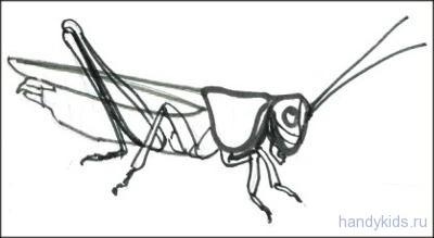 Как поэтапно нарисовать подорожник карандашом поэтапно 184