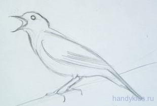 Как нарисовать соловья карандашом