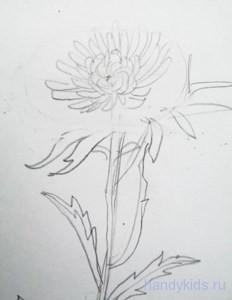 Как рисовать астру