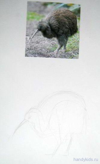Рисуем киви
