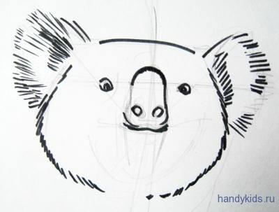 Как нарисовать мордочку коалы