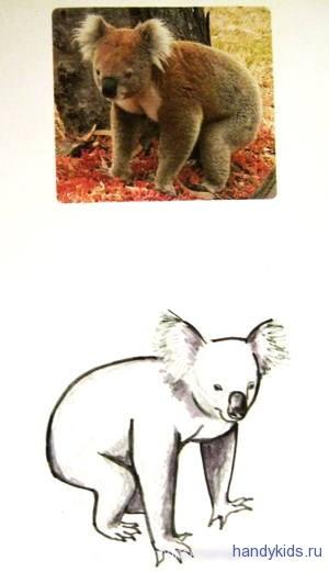 Нарисуем коалу