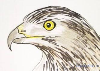 Рисунок голова сокола