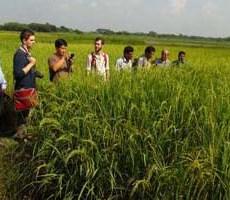 94994_Visitors-witnessing-a-rice-plot-in-Jhenaidah-09-newsnextbd