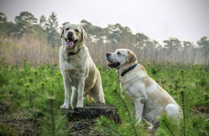 Glucosamine: Helping Dogs with Hip Problems