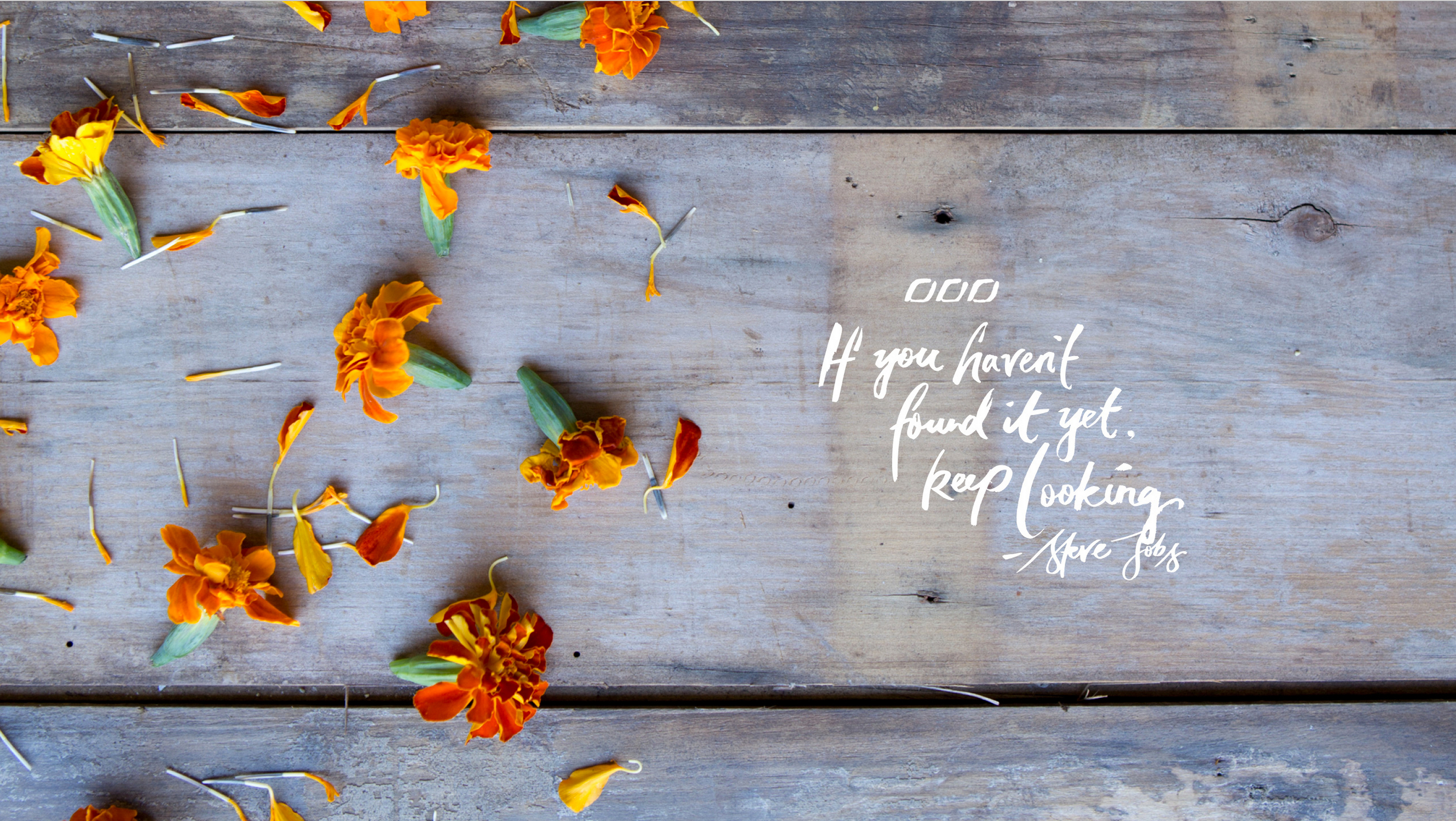 Pink Fall Quote Wallpaper Quote The Happsters