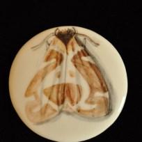 """Moth, ceramic, 2"""" diameter, 2015"""