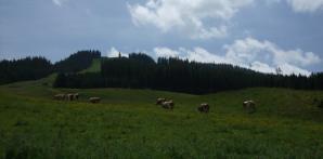 zum Wolfgangsee