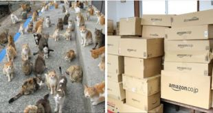"""Cat Island"" Almost Ran Out Of Food, Until The Internet Helped!"