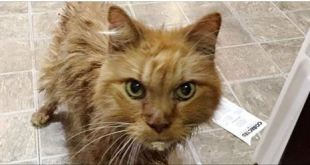 20 Year Old Cat is So Happy to Be Given a Home, He Can't Stop Purring