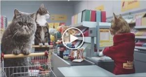 Crazy German Advert Features Cats Pushing Trolleys Around a Supermarket