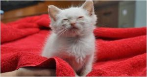 Kitten Feels Love For The First Time After Being Rescued From Streets