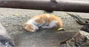 kitten-left-on-the-side-of-a-road-to-die-is-saved