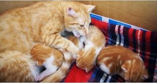 """Mama Cat """"Talking"""" To Her Babies – VIDEO"""