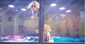Pet Store Kitten Climbs Over Partition To Play With Lonely Puppy