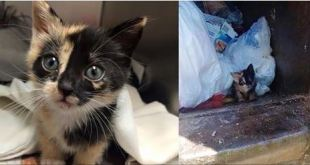 Trash Worker Saves Tiny Kitty Found in His Truck