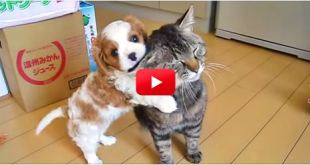 Wow! What A Patient Cat. Look At How Well He Handles His New Family Member!