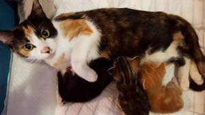Paralyzed Mom Cat Drags Herself To Place She Left Kitties After Neighbor Unsuccessfully Tries To Murder Her