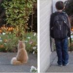 Cat Patiently Waiting with His Little Human for School Bus Every Morning
