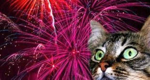 Italian City to Use Silent Fireworks Out of Respect for Animals