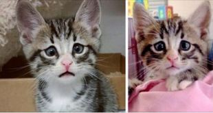 Kitten Born With Permanently Worried-Looking Eyes