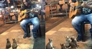 Man Sings To A Group of Tiny Kittens who Enjoy His Music