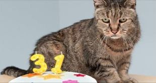 Meet Nutmeg – The World's Oldest Cat at 31!