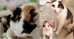 Stray Calico Mama Saved Along with Her 5 Babies, One of Them is 'Mini Mama'