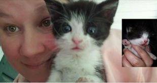 Woman Stops in Traffic to Save Kitten from the Brink of Death
