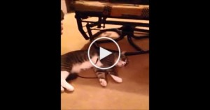 Smart Cat Playing DEAD To Avoid Going for a Recreational Walk
