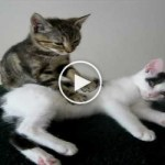 You MUST See This Kitten Massage Therapy. So AMAZING.