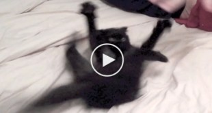 This Man Calms Down a Crazy Kitten. You Must See This.