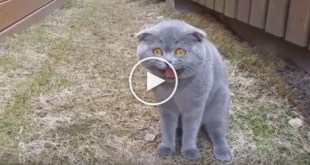 Cute Cat Arguing With Her Human. Incredible Video