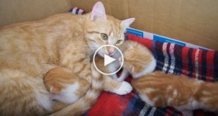 Cute Cat Mom Talking To Her Little Babies. So FASCINATING.