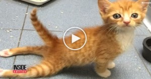 Paralyzed Kitten Walking for the First Time. Heart Melting Story…