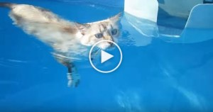 This Cat Is the New Michael Phelps