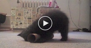 You Have To See This Amazing Cute Yoga Kitten