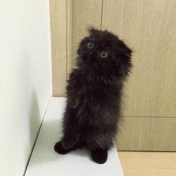 black-kitty-1