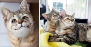 Cute Kitties Born Without Eyelids Are Very Thankful After Kind Humans Save Their Sight