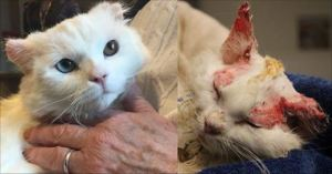 Burned Kitty Adopted By Woman With Similar Story – Also Burn Survivor