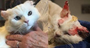 Burned Kitty Adopted By Woman With Similar Story - Also Burn Survivor