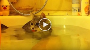 Sweet Cat Enjoying Wonderful Bath Time With Her Human. RARE Video !