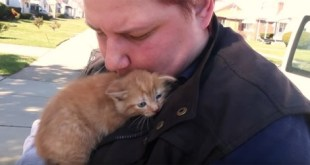 Little Kitties And Their Mom Rescued After Being Thrown Out Of a Moving Car