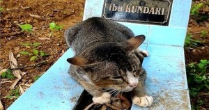 Loyal Cat Doesn`t Want To Leave Her Owners Grave, Even After Their Son Adopted Her