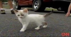 Someone Thrown Tiny Kittens Out Of a Car Window. But, That`s Not The End Of This Case…