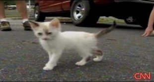 Someone Thrown Tiny Kittens Out Of Car Window. But, That`s not the End Of This Case...