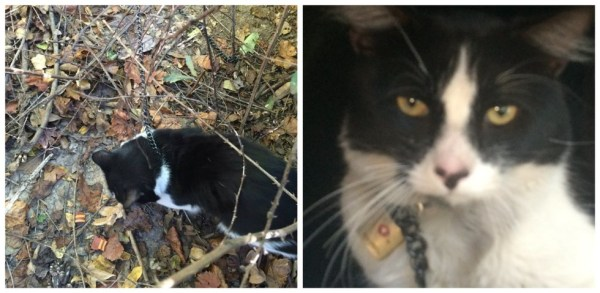 Cat Brutally Chained and Padlocked Abandoned In The Woods!