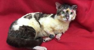 Brave Mom Cat Who Got Terrible Burns Trying To Save Her Kitties Gets Rescued