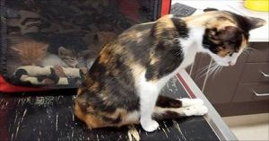 Cat Left Paralyzed By Evil Man Drags Herself To The Place She Left Her Babies